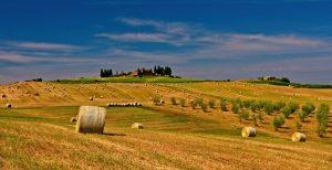 земеделска земя
