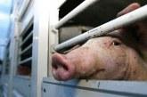 В сила влиза нов образец на Заявление за издаване на лиценз за превоз на живи животни