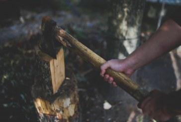 Установена е незаконна сеч на 74 дървета в чепеларско село