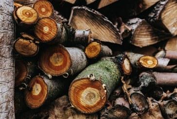Нагла кражба на дърва от ябълкова градина