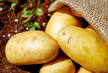 Отглеждане на ранни картофи