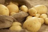 Отглеждане на картофи