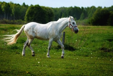 Приют за коне отваря врати в Дупница
