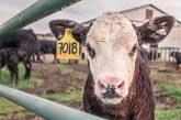 На кого вреди селскостопанската политика