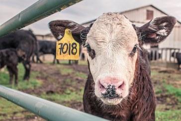 Над 2,22 млн. лева са преведени на земеделски стопани за хуманно отношение към животните