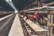 САЩ ще печели 1 млрд. долара годишно от износ на птици за Китай