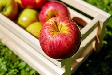 Как да увеличим добива на ябълки