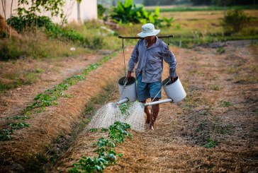 Защо продукцията стига до клиентите за сметка на фермерите