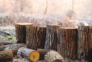 Намаляват нападенията срещу горските инспектори