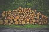 Продажбата на дървесина вече ще става чрез електронни търгове