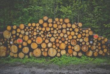 Кой изсича горите около Севлиево