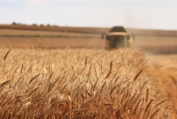 По-високи са добивите на пшеница и ечемик тази година