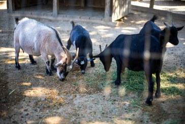 Престъпление ли ще е отглеждането на животни в задния двор