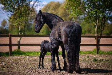 Почти 300 са регистрираните коне във Варненско