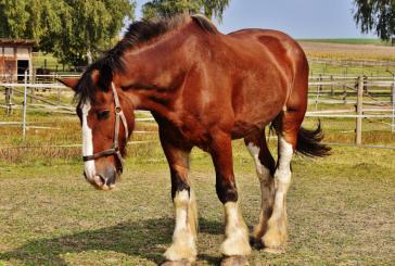 Обсъждат се мерки за профилактика и ликвидиране на болести по животните