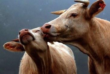 БАБХ засилва надзора над всички животновъдни обекти – пасища