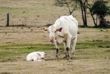 Над 23,651 млн. лв помощи по de minimis получиха животновъди