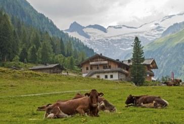 Ето от какво умряха шестте крави в района на хижа Иван Вазов в Рила (ВИДЕО)