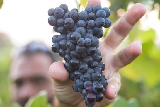 Пак променят наредбата за финансиране на лозаро-винарския сектор