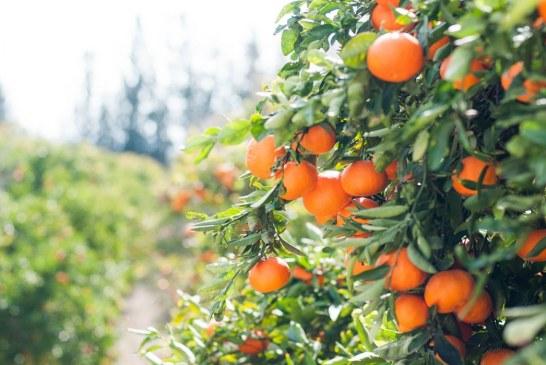 Как се набавят инвестиции за биологично земеделие