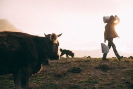 20-годишно дъно удря австралийското млекопроизводство