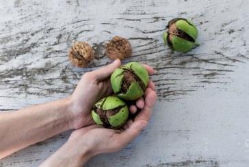 Кафявите петна по орехите могат да ви съсипят половината реколта