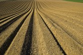 Сеитбата на слънчоглед и царевица у нас по-висока спрямо май 2019 г.