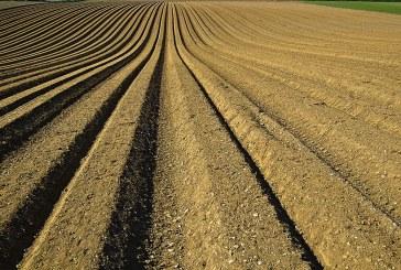 Добре е да се прави почвен анализ на всеки 3 години