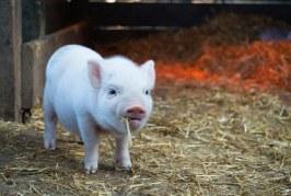 ЕК подкрепя усилията за хуманно отношение към животните
