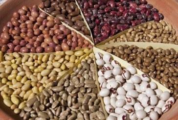 В Добричко прибраха добра реколта от фасул