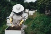 Скоро пчеларите ще подпишат договори за финансиране по НПП