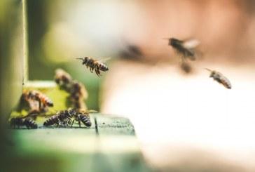 Пчелните семейства имат нужда от подхранване
