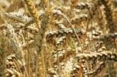 Украйна е в очакване на рекордни зърнени добиви