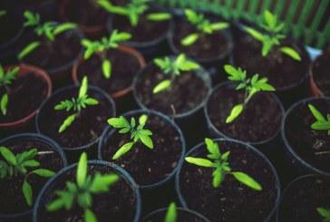 Растителна защита за производство на здрав зеленчуков разсад