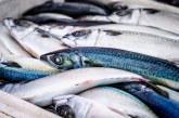 """Днес ще се проведе изложението """"Обичам българската риба"""""""