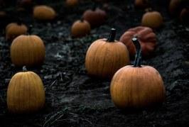 Най-едрите плодове и зеленчуци ще бъдат претеглени на Празника на плодородието в Шабла