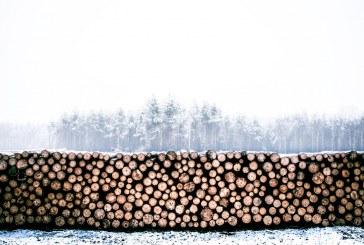 Пореден опит за кражба на дървесина