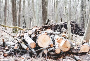 Почти 10 кубика незаконно изсечена дървесина конфискуваха в Добричко