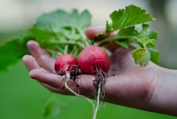 Земеделието е привлекателен сектор за все повече хора