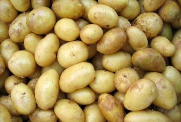 Със 17,2 % са поскъпнали картофите за година