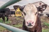 Бактериални и вирусни заболявания откриха по животни в Ямболско