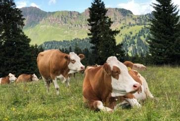 4,3 млн. лв. вече са разпределени между животновъдите