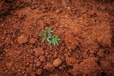 Министерски съвет предлага Национална програма за опазване, устойчиво ползване и възстановяване функциите на почвите (2019 – 2028 г.)