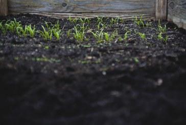 Обработват земеделски площи срещу плевели в Плевен