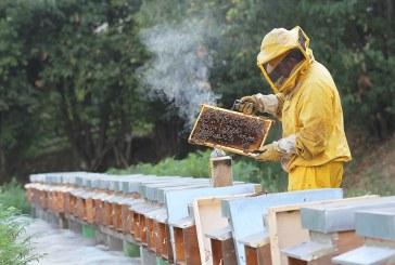 Система от сензори следи състоянието на пчелите