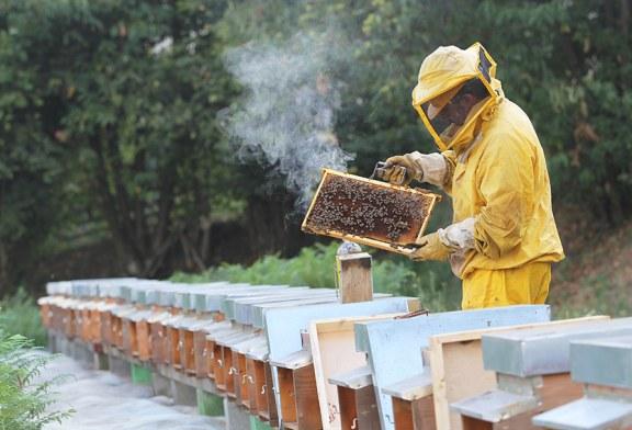 Стартира прием по пчеларската програма