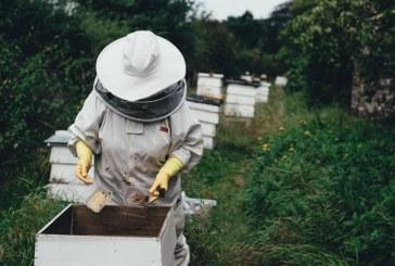 Над 3,3 млн. лв. са платени по de minimis на пчеларите