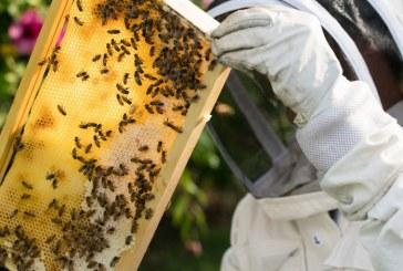 Медът ясно отчита замърсяването на въздуха