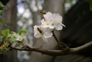 Как да увеличим популацията на пчелите
