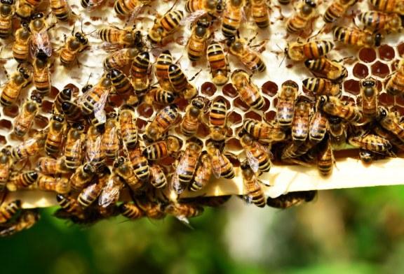 ВАЖНО за пчеларите от община Горна Оряховица
